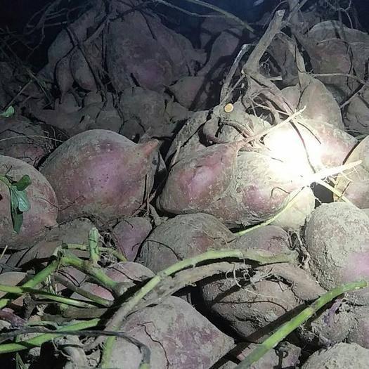 河南省郑州市上街区 西瓜红商品红薯红皮红心红皮白心