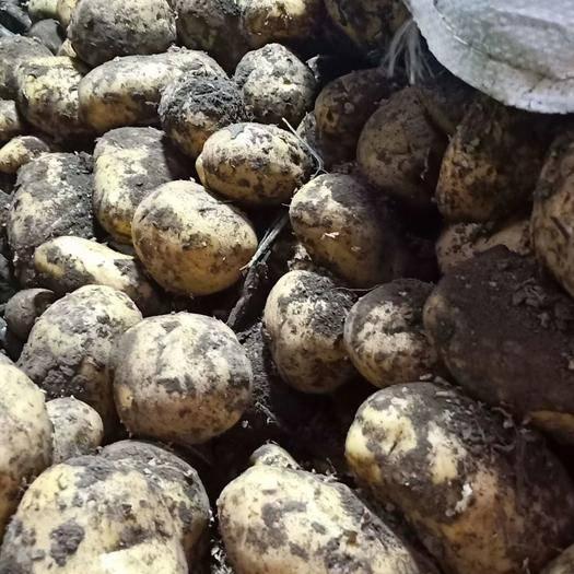内蒙古自治区呼伦贝尔市牙克石市兴佳2号土豆 3两以上