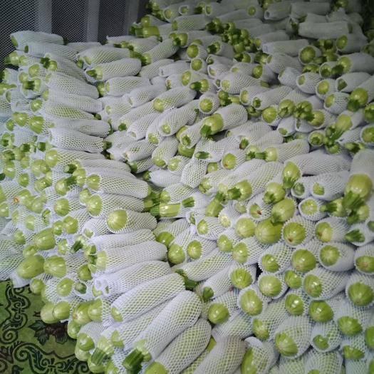 云南省红河哈尼族彝族自治州弥勒市绿皮西葫芦 混装通货