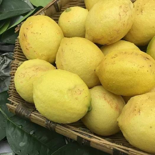 资阳安岳县 柠檬三级果大 中 小可选产地批发新鲜酸爽多汁