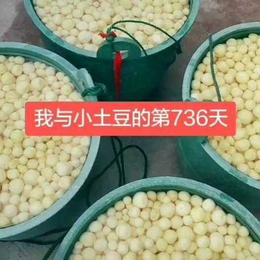 浙江省台州市椒江区迷你土豆 1两以下