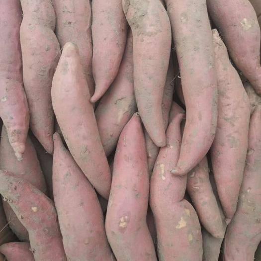 河北省廊坊市安次区烟薯25 不甜不要钱烟薯蜜薯