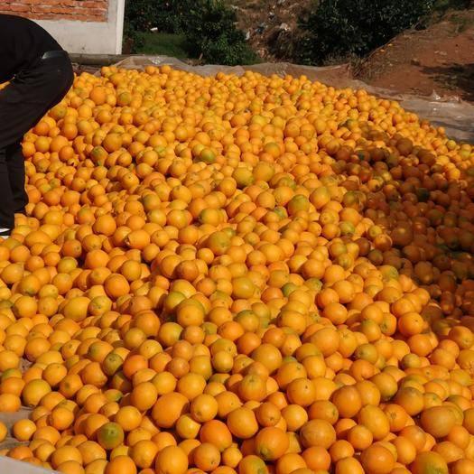 江西省赣州市信丰县赣南脐橙 纯天然无公害绿色食品