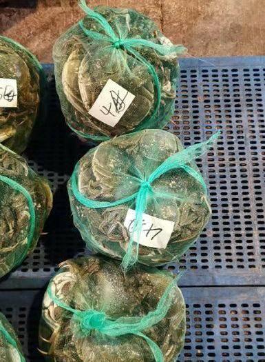 洪湖市 洪湖清水大闸蟹,季节到了质量就杠杠的