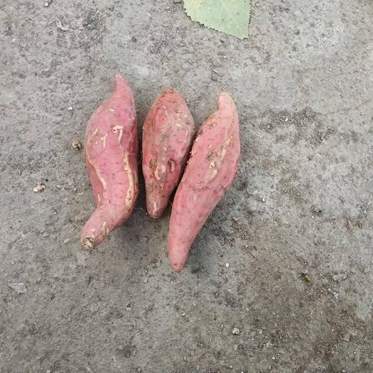 河南省驻马店市汝南县烟薯25 3两~6两 红皮