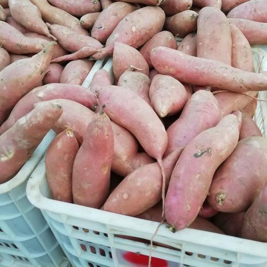 河北省保定市雄县 红薯批发,便宜了