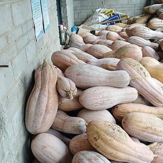 重庆市涪陵区蜜本南瓜 混装通货