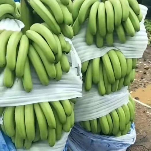 文山麻栗坡县 香蕉果肉饱满,口感好,皮薄肉多,原生态的味道。价格又便宜!