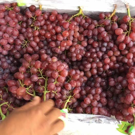 邯郸红宝石葡萄 大量库存红宝石,圣诞玫瑰,需要的联系