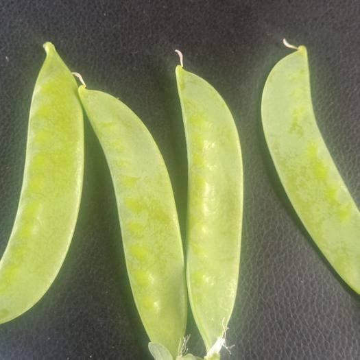 云南省大理白族自治州大理市 荷兰豆