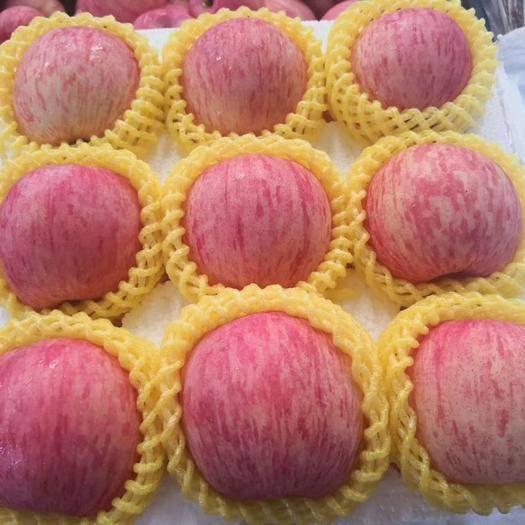 棲霞市紅富士蘋果 【正常發貨】脆甜多汁可帶皮吃的精品一級紅富士片紅條紋隨機