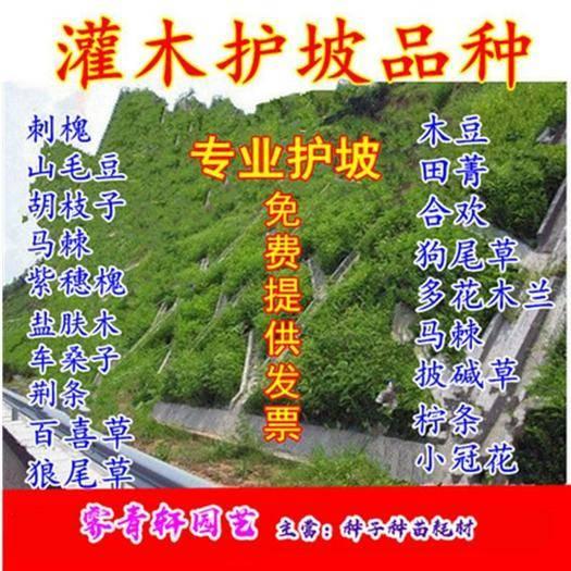 郑州二七区 国槐种子专业护坡种子新种子包邮