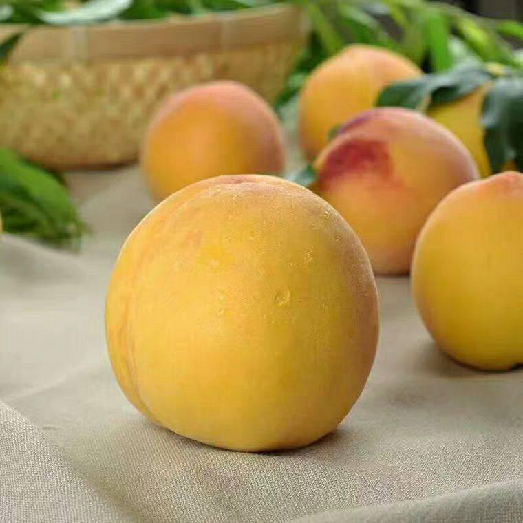 黃金黃桃 黃金桃   口感好  甜 自家種植