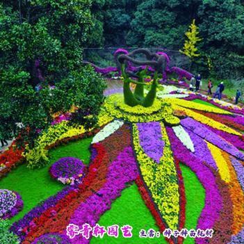 野花组合种子各种花草种子
