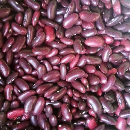 富源縣 需要紅腰豆的老板聯系我大量供應