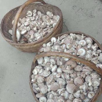 花菇 自家种植,干货可发,个头均匀,肉厚。