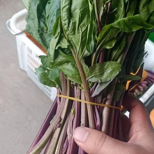 贵州省黔南布依族苗族自治州长顺县红菜苔 25~30cm
