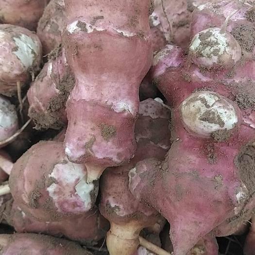 甘肃省白银市会宁县 洋姜,紫菊芋,所剩15,16吨,马上立冬了急售