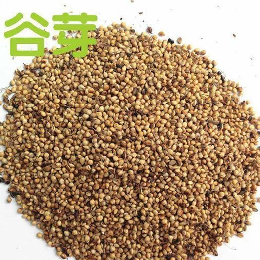亳州譙城區 谷芽,一斤起包郵,無需運費