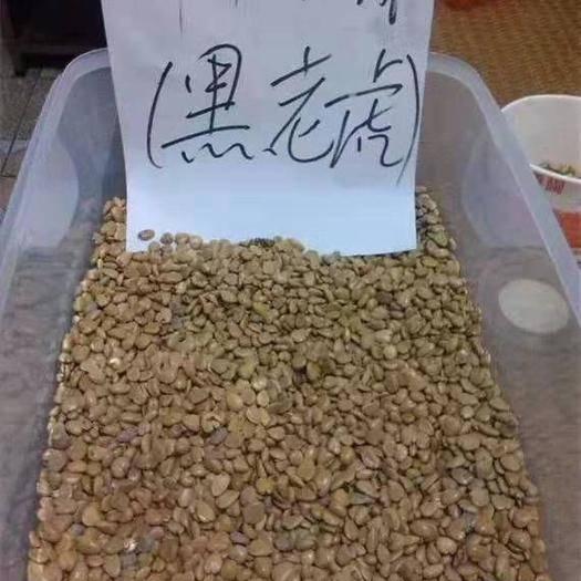 怀化通道侗族自治县 少籽黑老虎种子/布福娜种子  单果2斤重
