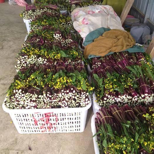 湖北省孝感市汉川市 汉川  洪山  红菜苔