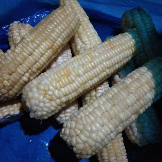 临沂速冻糯玉米 12-18个月