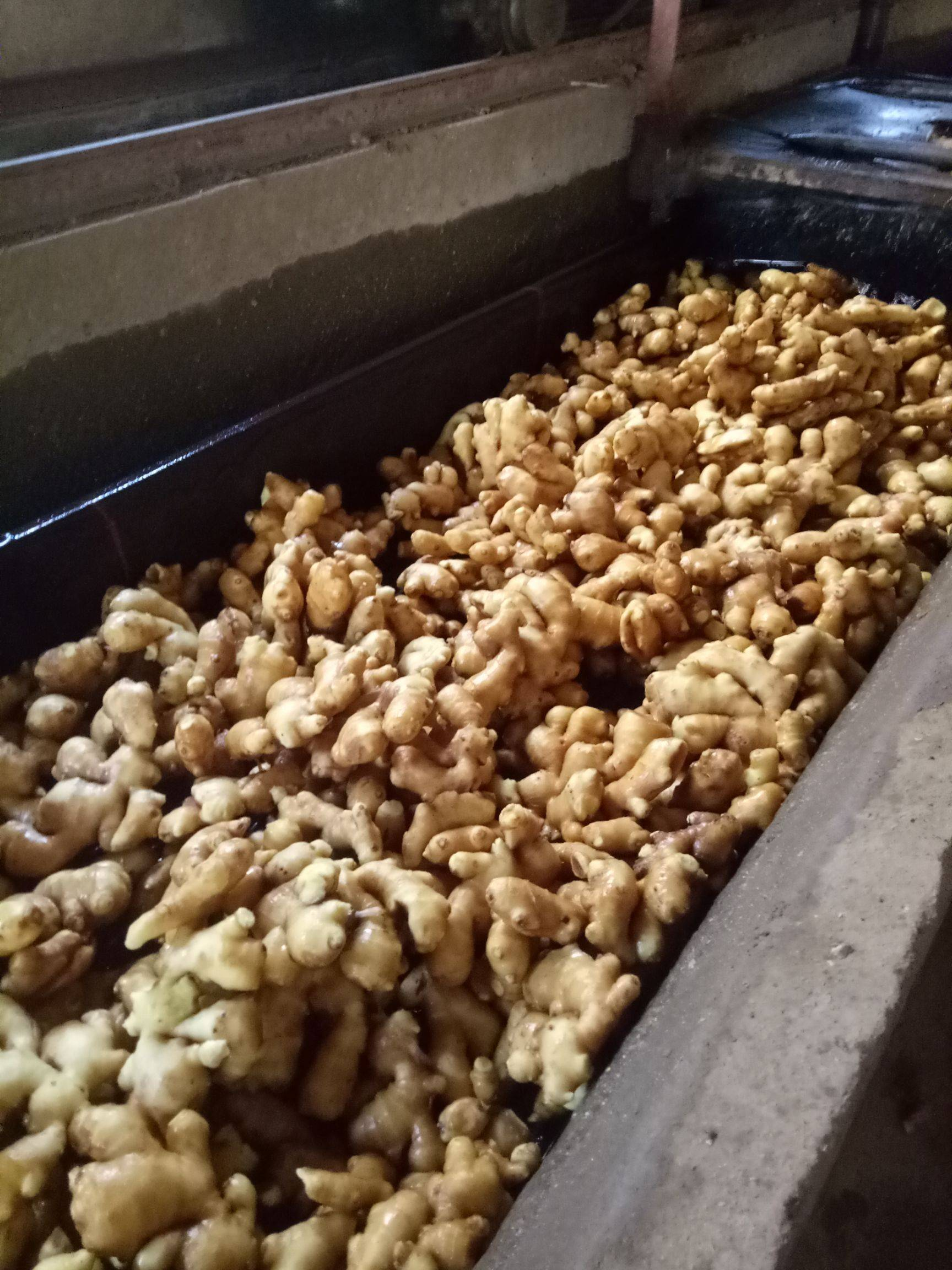 生姜 大黄姜 优质生姜品种齐全 可提供水洗人工包装等