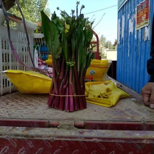 湖北省孝感市汉川市 产地精品红菜苔