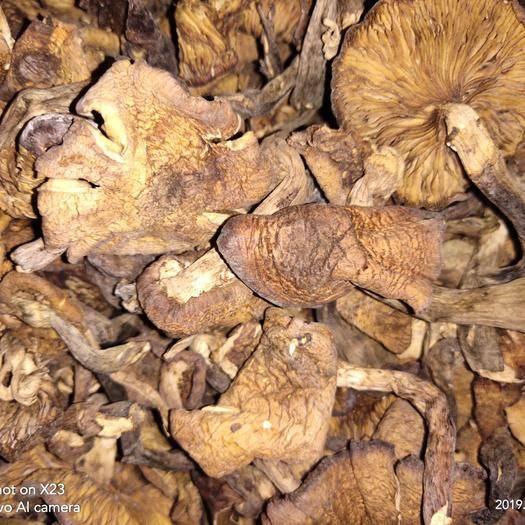 黑龙江省哈尔滨市南岗区 东北特产野生榛蘑中片无根品质好