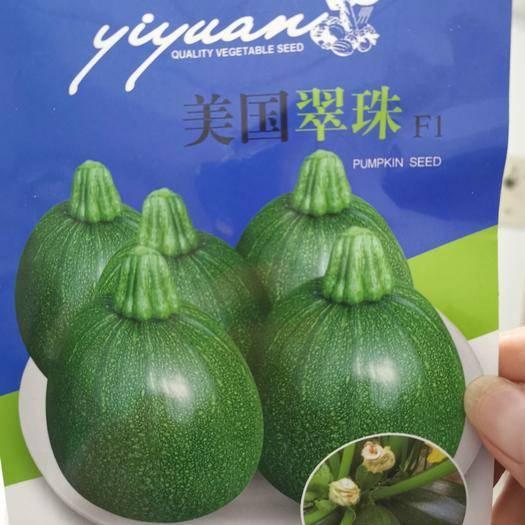 郑州 美国脆珠西葫芦种子10g