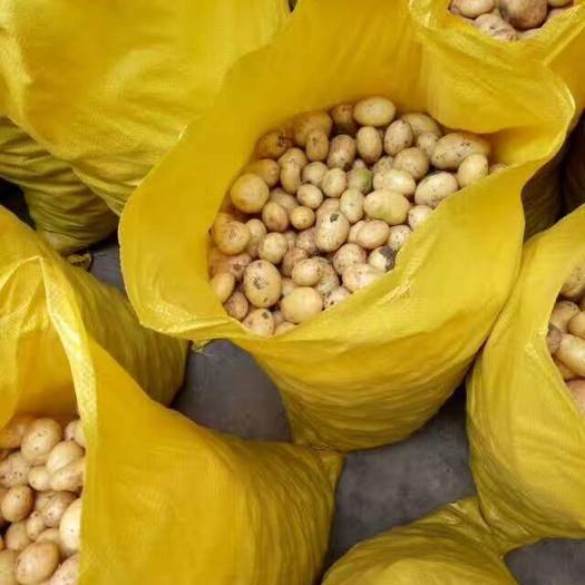 滕州市 常年供應優質迷你土豆