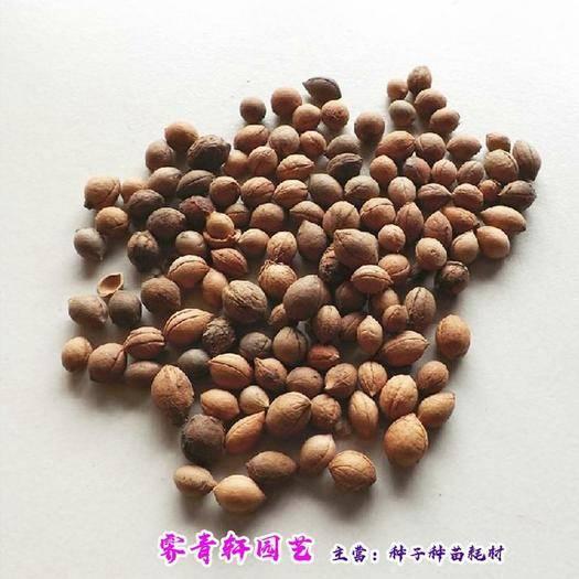 郑州二七区 钙果种子欧李种子补钙果种子