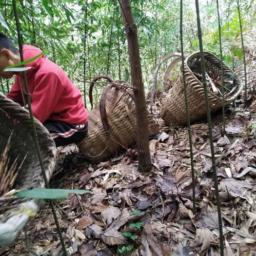 四川省宜宾市筠连县 出售粗加工方竹笋可长时间保存