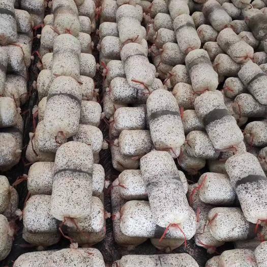 淮北杜集区 高产平菇菌包拉回家就出菇的