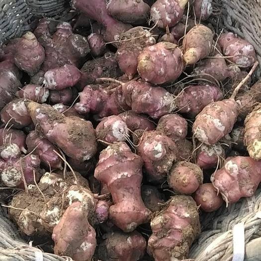 甘肃省白银市会宁县 洋姜,紫菊芋,13吨,统货4毛6