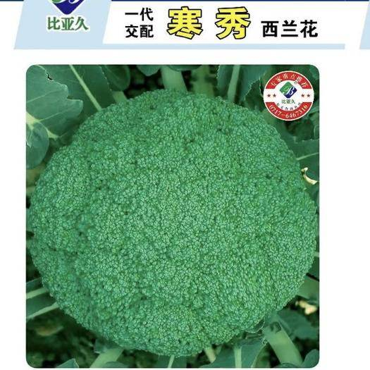 周口扶沟县耐寒优秀西兰花种子 寒秀~一袋2000粒,耐寒性好,零下8~9度绿油油,春秋两季