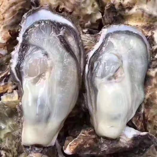 威海乳山市 正宗山东乳山牡蛎现捞现发一级品限时促销