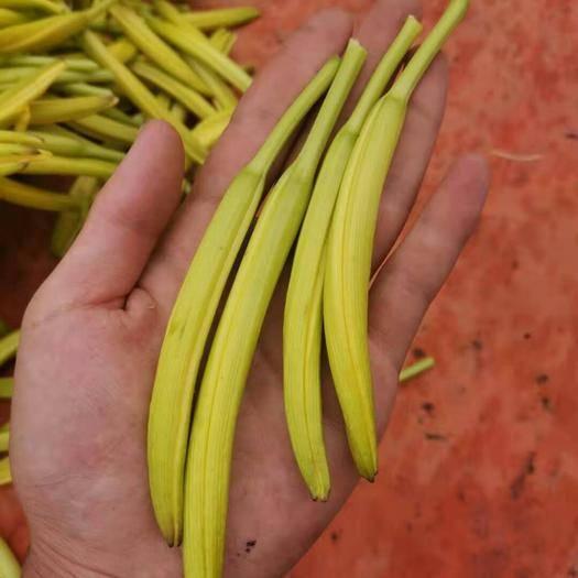 河北省张家口市赤城县七蕊黄花菜 无污染的绿色食品