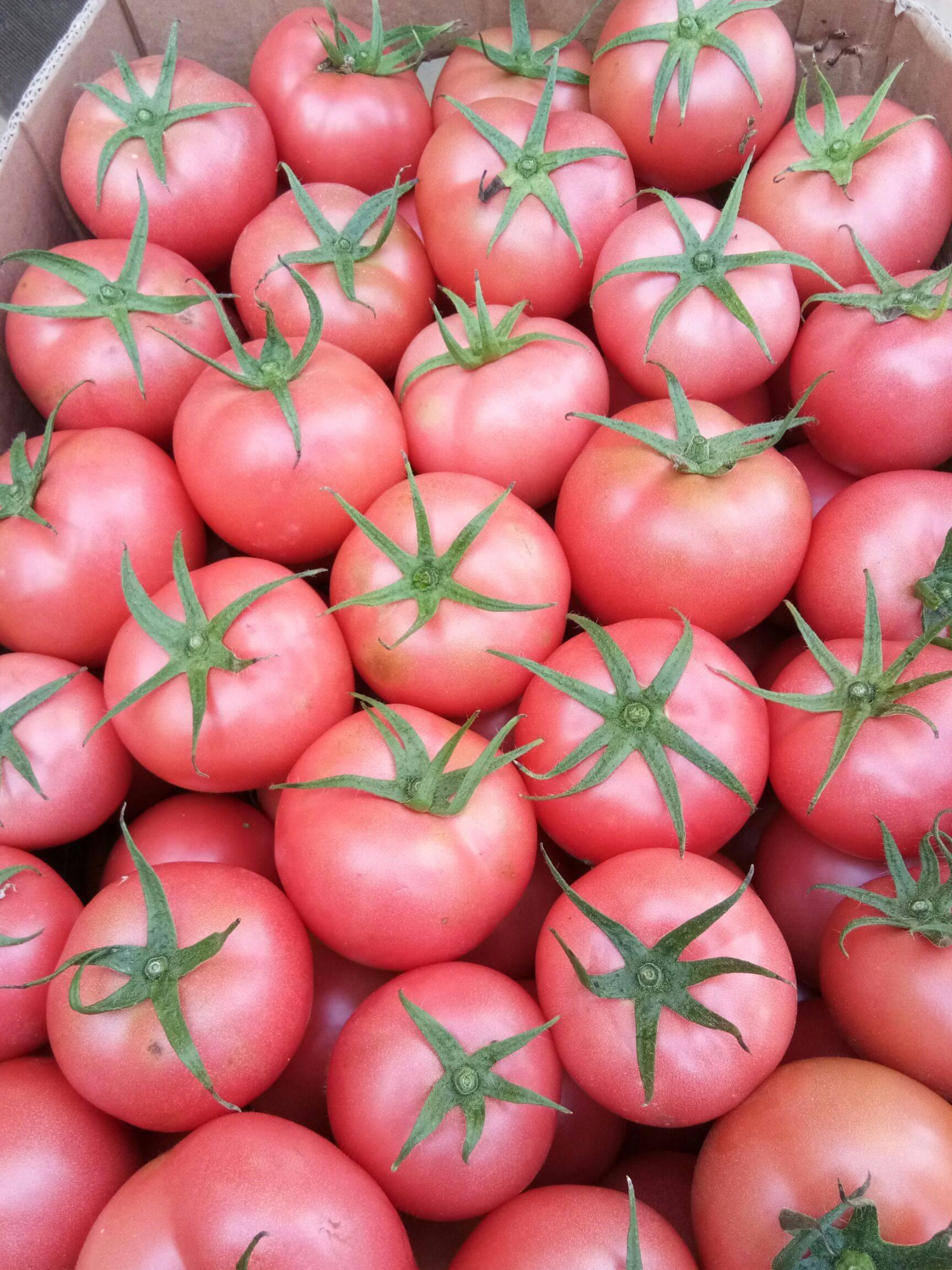 以色列西紅柿 陽光二號