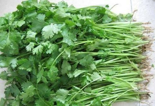 河北省唐山市丰南区 大量出售香菜,量大从优,包运输!