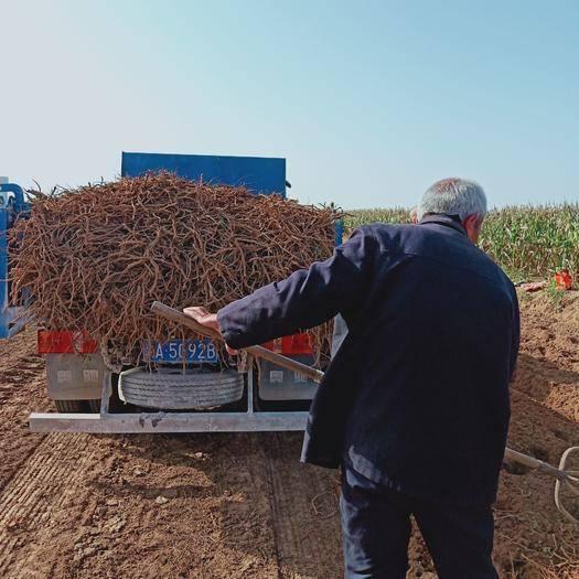 渭南合阳县 黄芩鲜货,一年半,两年半