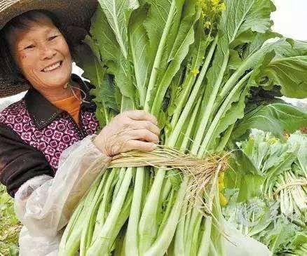广东省广州市增城区 增城迟菜心你吃过没?