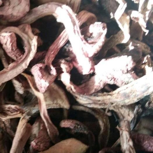 吉林省通化市柳河县蘑菇 东北野生松树伞