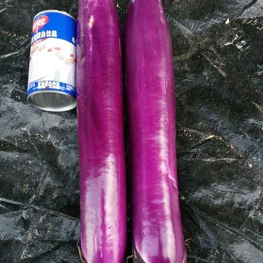 海南省乐东黎族自治县乐东黎族自治县839长茄子 30~40cm 长茄