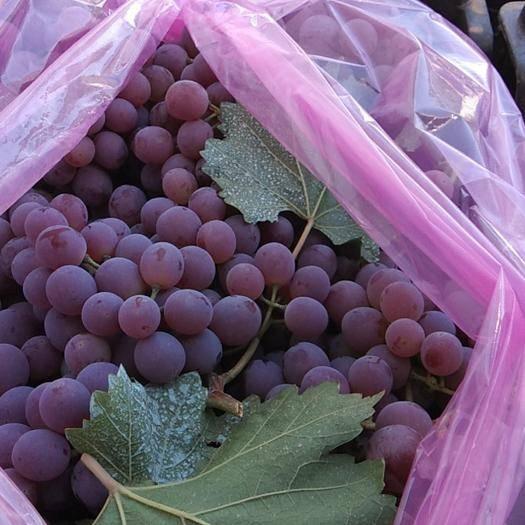 涿鹿县红地球葡萄 1.5- 2斤 5%以下 1次果