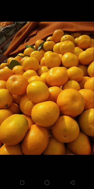 蜜桔 2 - 2.5cm 1 - 1.5兩