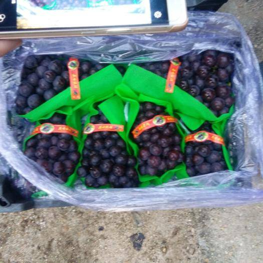 锦州北镇市 我地区为中国葡萄鲜储第一镇,产量大,口感好,品质高。