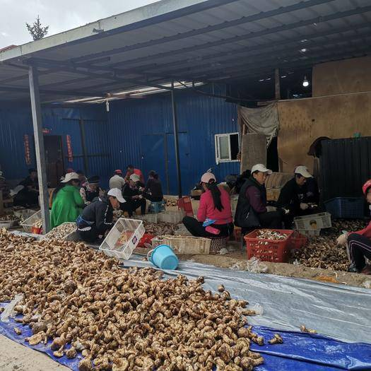云南省迪庆藏族自治州香格里拉市 产地直供直供松茸干片  支持拍摄达人