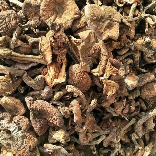 吉林省吉林市桦甸市 本地榛蘑,质量好大量批发
