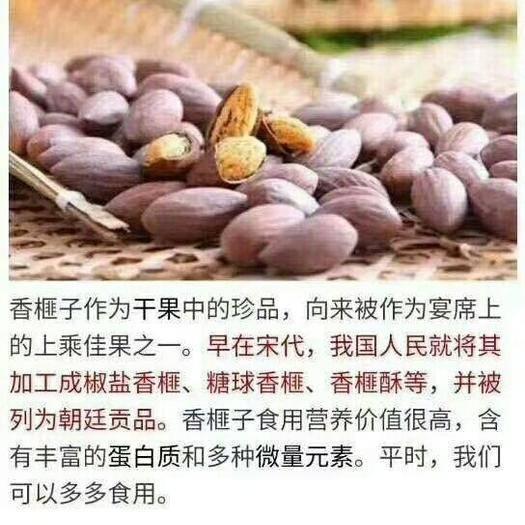 绍兴 老树香榧  榧中精品